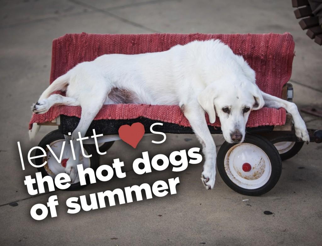 Dog laying on a custom wagon at a Levitt Pavilion show
