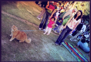 A cat at a Levitt venue in greater Los Angeles. In his natural habitat, a cat is free to enjoy green space, picnic scraps and behind-the-ear scratching, just like his dog counterparts.