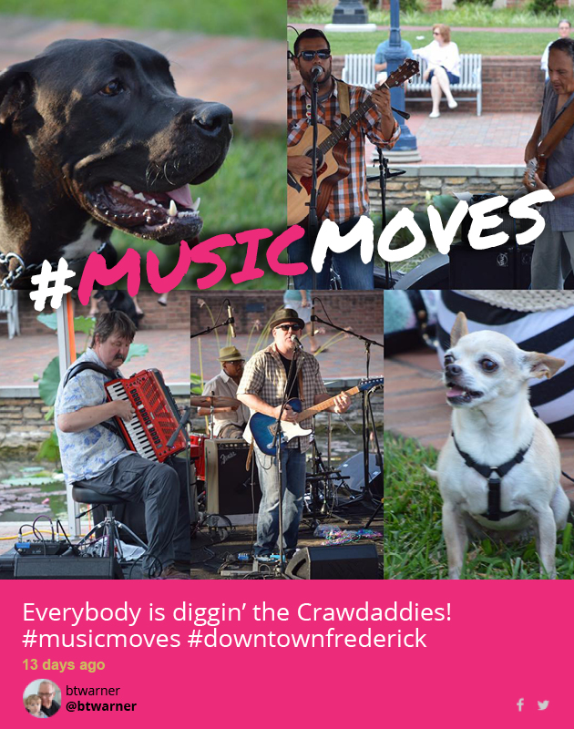 Musicmoves playful pups