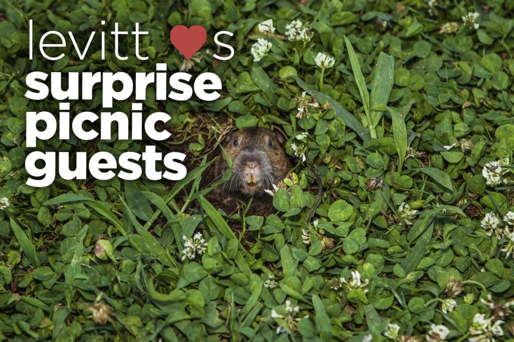 Surprise picnic guests