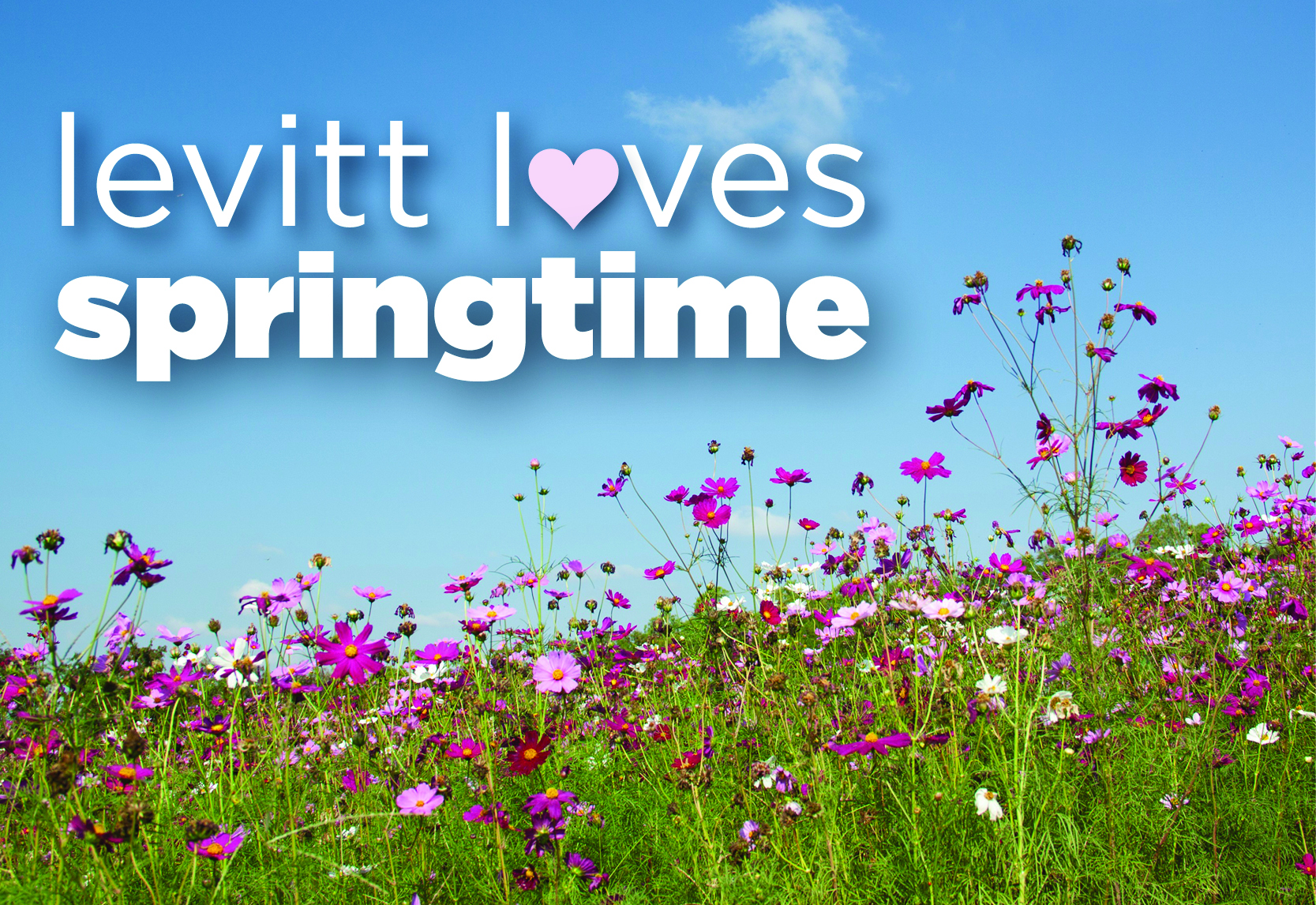 Levitt_loves_springtime