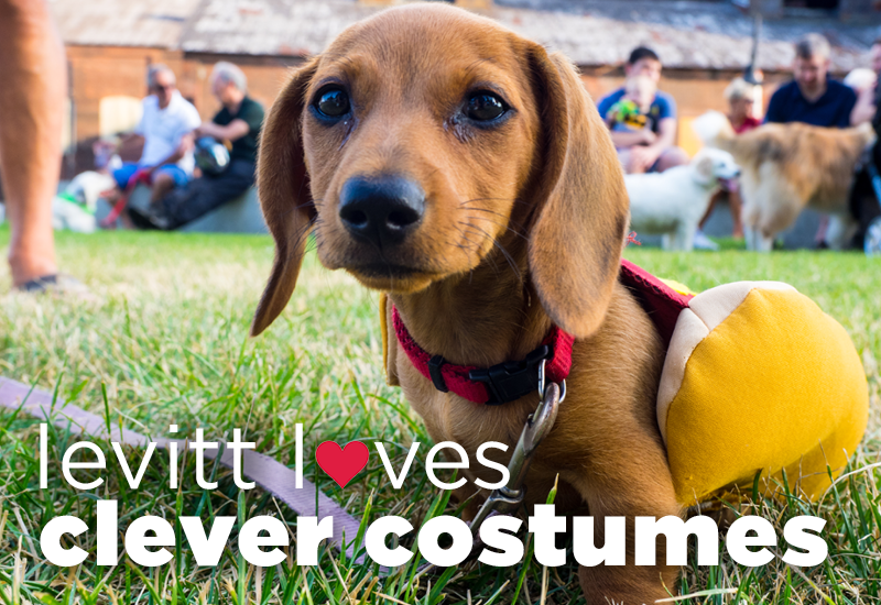 Levitt loves...clever costumes